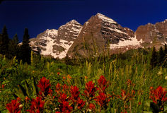 Maroon Bells. Mountain wildflowers and Maroon Bells Colorado Royalty Free Stock Image