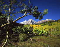 Maroon Bells & Aspen Branch. A horizontal image of twin mountain peaks, called the Maroon Bells, and and a grove of aspen trees located in the White River royalty free stock image