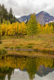 Maroon Bells Autumn Reflection Royalty Free Stock Photo