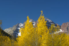 Maroon Bells fall foliage. Fall foliage with Maroon Bells in the background Stock Images