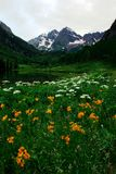 Maroon Bells in full bloom. Maroon Bells and flowers in spring Stock Images