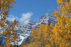 Maroon Bells and Golden Aspens. Maroon Bells above golden aspens, Aspen, Colorado Stock Photos