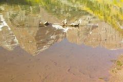 Maroon Bells reflection. Autumn reflection shot of Maroon Bells in maroon lake near Aspen, Colorado Stock Image