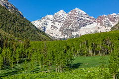 Maroon Bells And Summer Aspen Grove Royalty Free Stock Photography