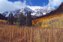 Maroon Bells, Tall Weeds Stock Photos
