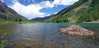 Maroon Dam. Beaver dam in Maroon Bells, Aspen, Colorado royalty free stock photo