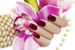 Maroon manicure. Maroon manicure on female hand with Orchid and a pearl bracelet Royalty Free Stock Photography