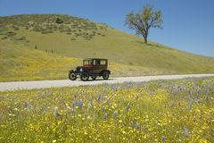 A maroon Model T driving down a scenic road surrounded by spring flowers off of Route 58, Shell Road, CA Royalty Free Stock Images