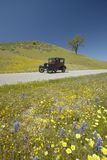A maroon Model T driving down a scenic road surrounded by spring flowers off of Route 58, Shell Road, CA Royalty Free Stock Photography