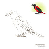 Maroon oriole bird learn to draw vector Royalty Free Stock Photography