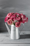 Maroon and white persian buttercup flowers. Curly peony ranunculus in Metallic gray vintage watering can, copy space. Royalty Free Stock Photo