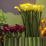 Maroon and yellow Calla. For florist and decorating Stock Images