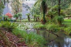 Maroondah秋天的水库公园 库存图片