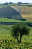 marços (Itália): paisagem do verão Imagem de Stock