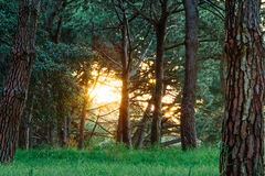 Sunset in the forest at Centennial Park. Sunset penetrating through the lush forest Stock Photo