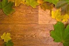 Marple leaves frame on wooden texture Stock Photography