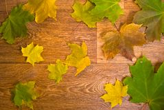 Marple leaves on wooden texture Stock Images
