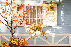 Marple tree with orange leaves in front of wooden house in Flori Stock Photos