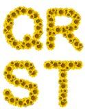 marque avec des lettres le tournesol de qrst Photographie stock libre de droits