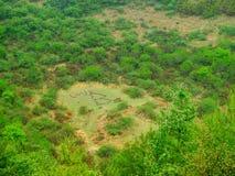 Marque d'amour dans les forêts Photo stock