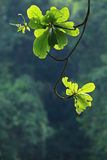 Marque d'arbre vert image stock
