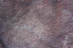 Marque d'ondulation en vallée de Longtan à Luoyang Photographie stock libre de droits