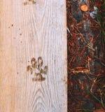 Marque de chien Images libres de droits