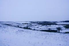 Marques de lièvres sur la neige Image stock