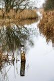 Marqueur de niveau d'eau à la réservation d'oiseau de Leighton Moss RSPB Photos libres de droits