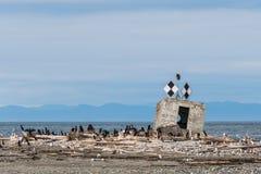 Marqueur noir et blanc de navigation de forme de diamant avec l'aigle chauve se reposant sur le dessus, péninsule de Smith Island image stock