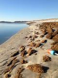 Marqueur perdu de homard à la marée lâche photographie stock