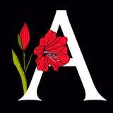 Marquez avec des lettres A avec Amaryllis Flower Photo libre de droits
