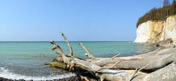 Marquez la falaise à la craie de roche de l'île Allemagne de Rugen dans le printemps images libres de droits