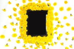 Marquez sur tablette et jaunissez la fleur de pissenlit sur le fond blanc Photos stock