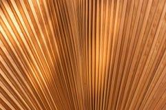 Marrón de las hojas de palma del brushing Fotos de archivo libres de regalías