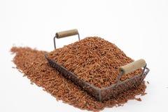 Marrón del arroz Imágenes de archivo libres de regalías