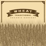 Marrón retro de la tarjeta de la cosecha del trigo ilustración del vector