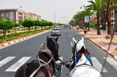 Marrakech horse ride Royalty Free Stock Photography