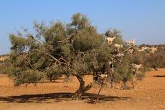 Marrakech natury krajobrazy w Maroko, Afryka Pustynia i góry Podróż Maroko zaniki Obrazy Stock