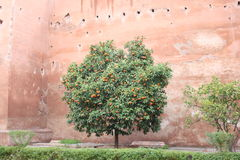 Marrakech Orange Tree Stock Photos