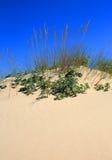 Marram χλόη στον άμμος-αμμόλοφο Στοκ Εικόνα