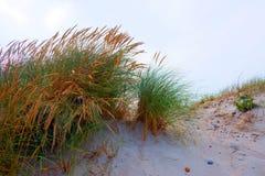 Marram на дюне Стоковое фото RF