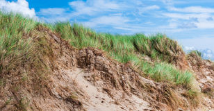 Marram blowing in the wind at a dune Stock Photography