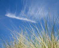 Marram Grass Stock Photos