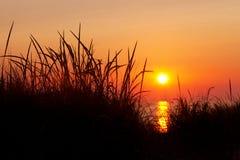 Marram Grass Silhouette at Sunset - Lake Michigan Stock Image
