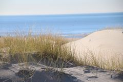 Marram grass in the sun at the sand dunes along the north sea coast in the Netherlands. Marram grass in the sun at the sand dunes along the north sea coast in stock photo