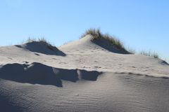 Marram grass in the sun at the sand dunes along the north sea coast in the Netherlands. Marram grass in the sun at the sand dunes along the north sea coast in stock image