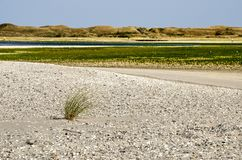 Marrammgras en shells op Texel stock fotografie