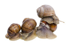 Marriage big snails games Royalty Free Stock Photo