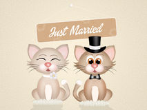 Marriage of cats Royalty Free Stock Image